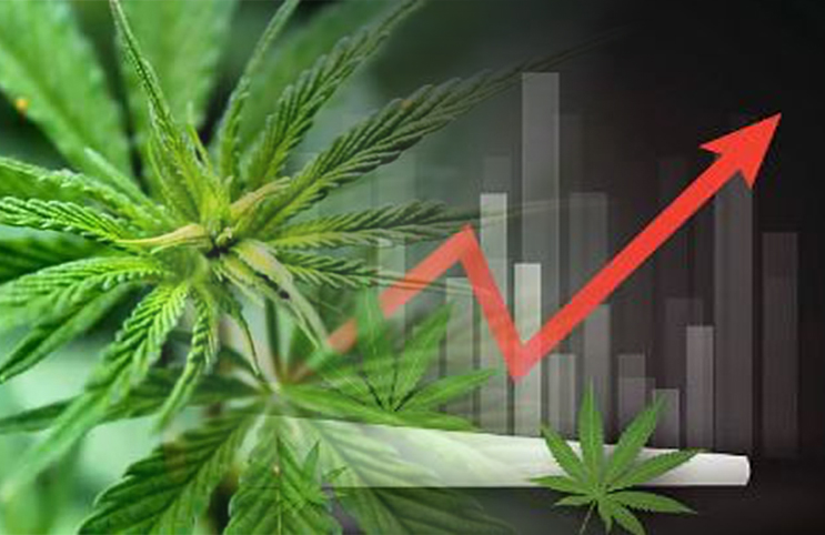 These Could Be The Best Cannabis Stocks To Buy In 2019 - L A